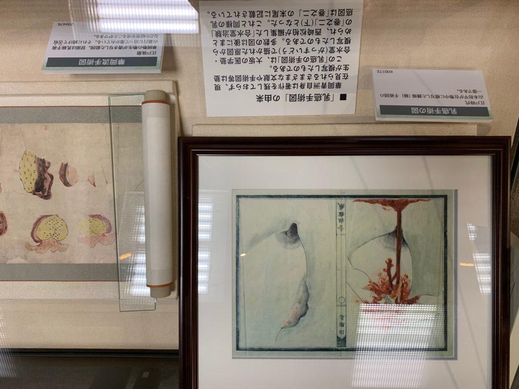 医史跡、医資料館探訪記33 内藤記念くすり博物館を訪ねてー企画展